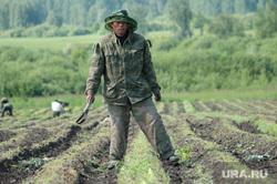 Китайцы. Гастарбайтеры. Сельское хозяйство. Архив 2007. Челябинск., сельское хозяйство