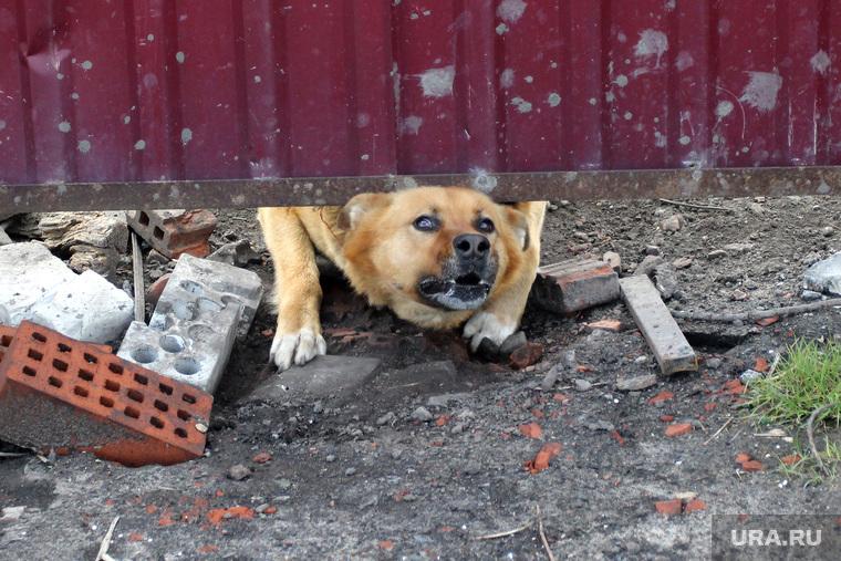 Поселок Восточный. Курган, собака, охранник, стоп, злой пес