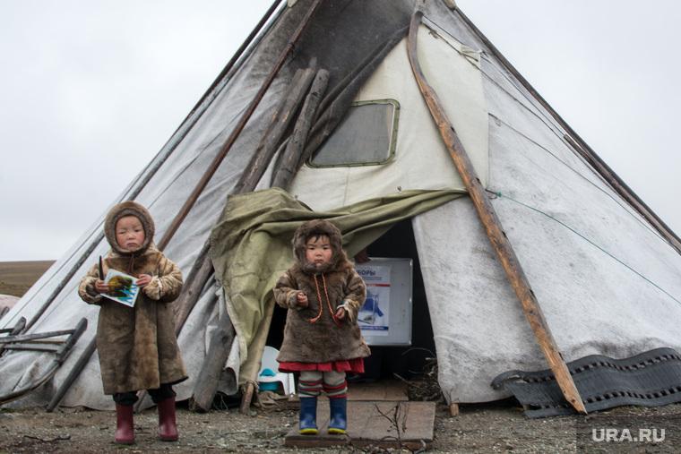 ЯНАО. Тундра + досрочные выборы, чум, кмнс, ненцы, дети, ребенок