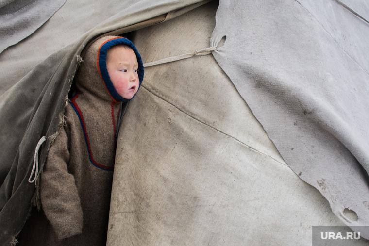 ЯНАО. Тундра + досрочные выборы, ребенок, чум, кмнс, ненцы