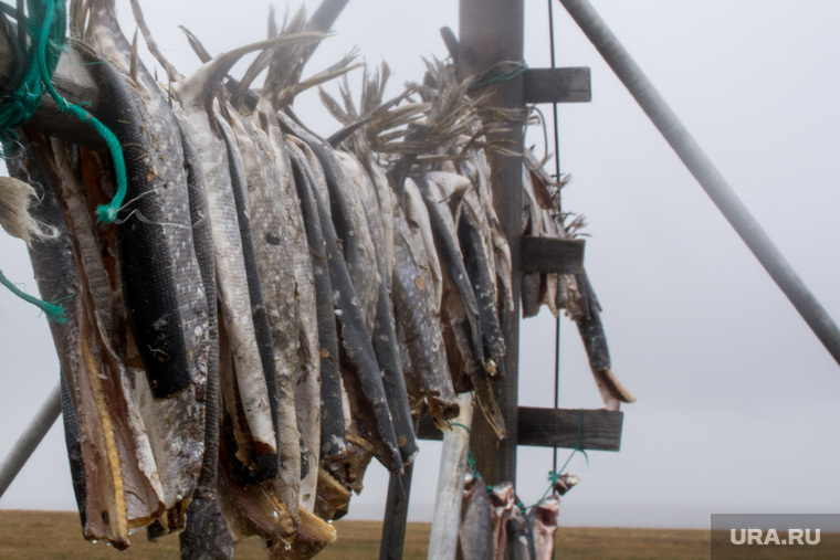 ЯНАО. Тундра + досрочные выборы, рыба