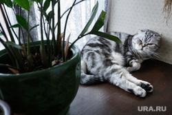 "Кафе ""Капкейня"" и ресторан ""Паштет"". Екатеринбург, кошка, домашнее животное, кот паштет"