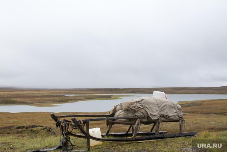 ЯНАО. Тундра + досрочные выборы, тундра, арктика, нарты