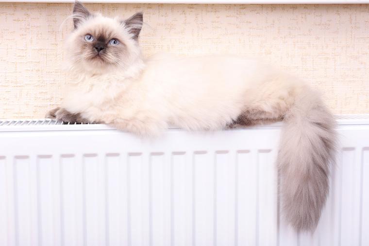 Коты на батарее, кот, тепло, домашнее животное, отопительный сезон, уют, котик на батарее, отпление
