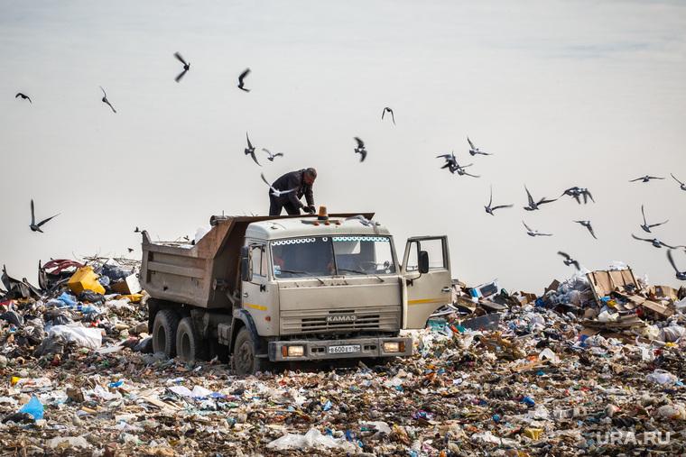 Полигон ТБО и цех сортировки. «Спецавтобаза». Екатеринбург, мусор, камаз, птицы, спецтехника, грузовик, гора, отходы, хлам, лка, тбо, самосвал, куча, окружающая среда, свалка, экология, отбросы, помои