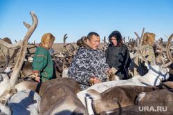Ямальский район, Яр-Сале, оленеводы