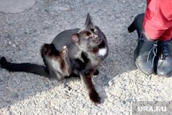 Сафакулево, деревня МартыновкаСафакулевский районКурганская обл, кошка, ноги