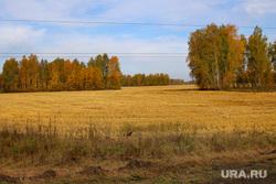 Сафакулево, деревня МартыновкаСафакулевский районКурганская обл, поле, осень, курганская область