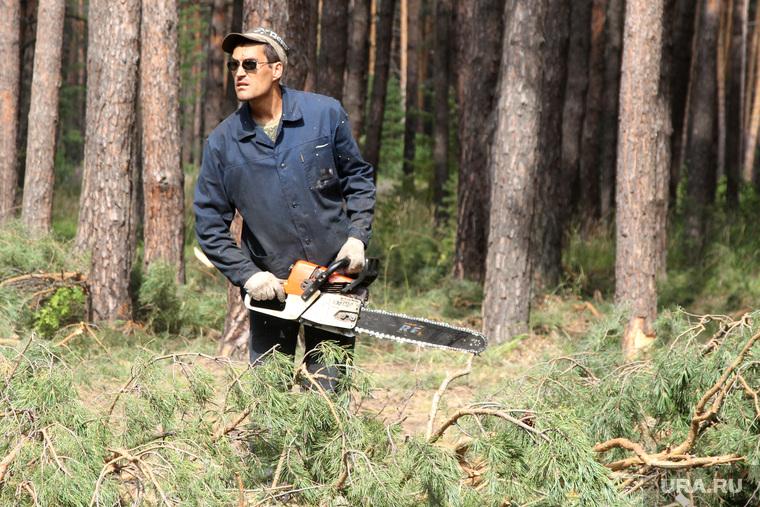 Вырубка леса КГСХА Курганская область, рабочий с бензопилой, лесоруб