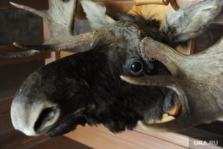 Пресс-тур по Синегорью Челябинск, миасс, чучело, лось