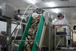 Эскурсия в цех Ямальских оленей, Ямал-продукта и молокозавод + Ямал-Ири, конвейер, рыба