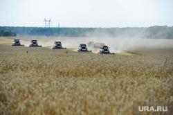 Дубровский и пшеница Челябинск, поле, комбайн, пшеница, урожай