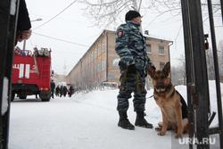 Нападение на учеников, школа 127. Пермь, служебная собака, школа 127, полиция, овчарка