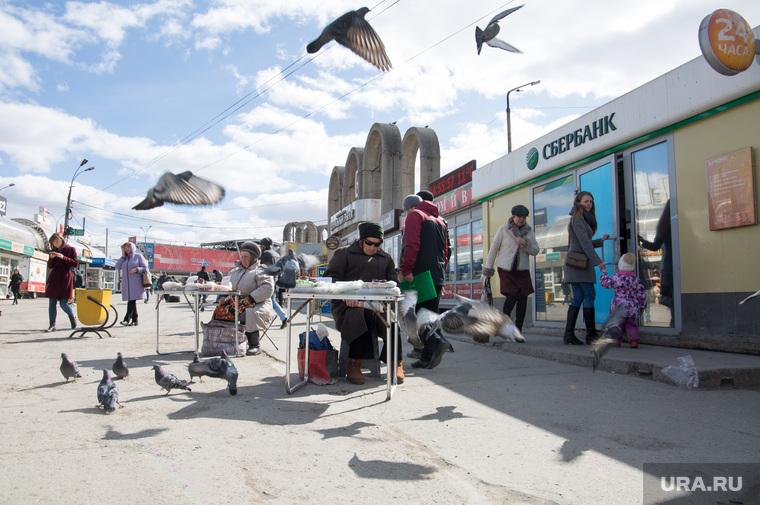 Виды Перми, торговля, голуби, птицы, бабушки, рынок