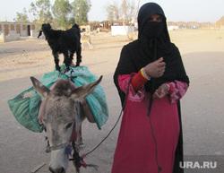 Египет, отдых туристов, хиджаб, попрошайки, ослик