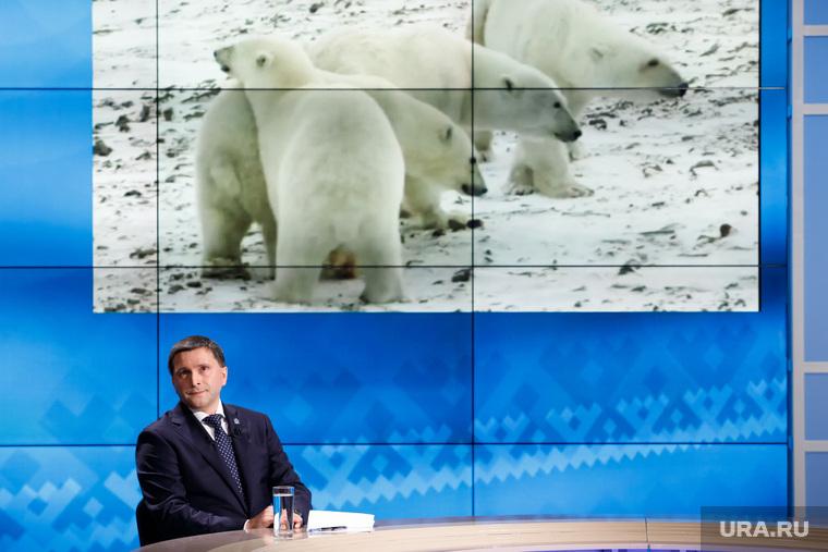«Разговор с Дмитрием Кобылкиным». Прямая линия губернатора ЯНАО. Салехард, кобылкин дмитрий, белые медведи, северные животные
