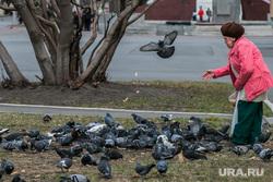 Разное. Курган, пенсионерка, голуби, бабушка, кормление птиц