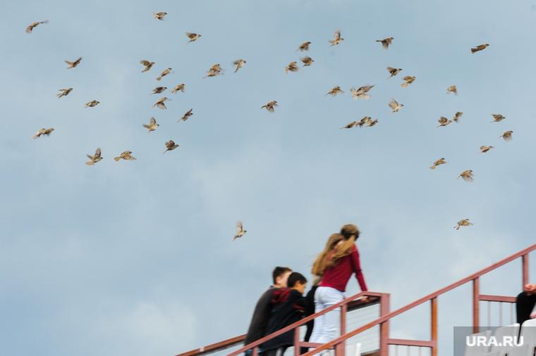 Сдача норм ГТО, активное долголетие, пенсионеры. Челябинская область, Миасс, воробьи, стая птиц