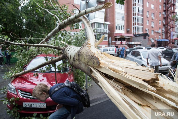 Упавшие деревья после урагана. Тюмень, пень, упавшее дерево, дерево упало на машину