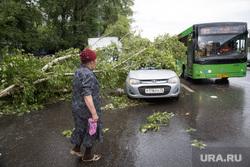 Упавшие деревья после урагана. Тюмень, упавшее дерево, дерево упало на машину