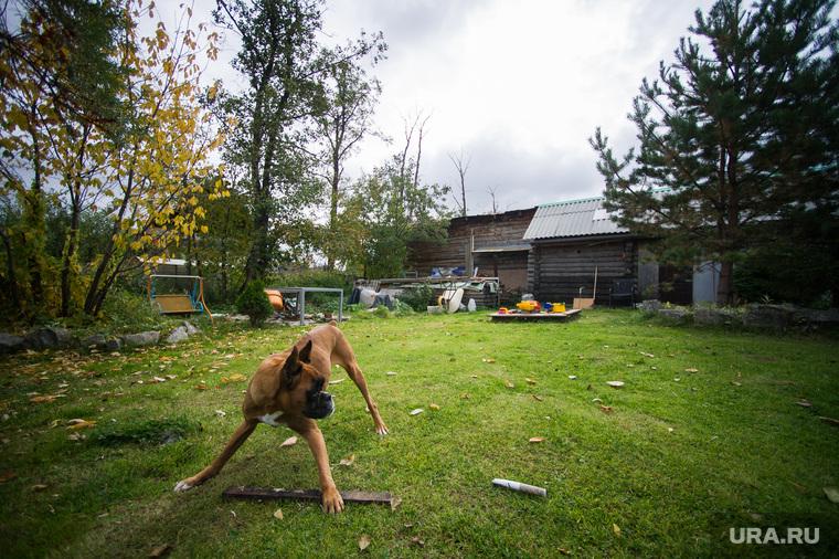 Дискордантная пара Алена и Стас. Екатеринбург , двор, дача, сад, собака