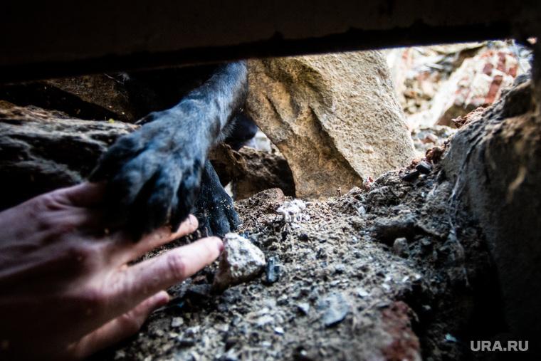 Сборы спасателей-кинологов УрФО. Екатеринбург, спасение, лапа, помощь, кисть руки, собака