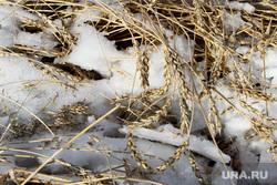 Алексей Кокорин в поляхКурганская область, пшеница, снег