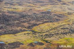Природа Ямало-Ненецкого автономного округа, олени, оленеводы, домашний скот, осень, пастбище, стадо оленей, природа ямала