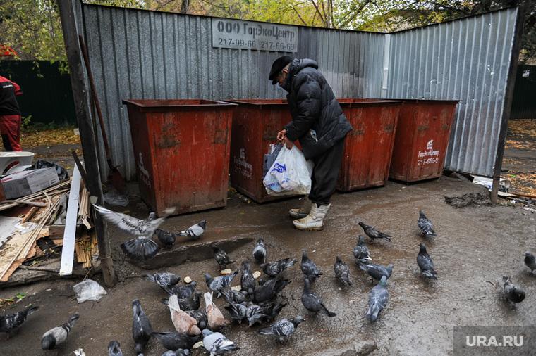 Мусорные площадки без контейнеров. Челябинск, контейнеры, голуби, помойка, мусорные площадки, мусор, горэкоцентр