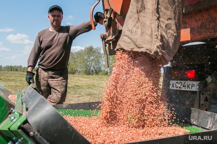 Посевная. Поселок Глинки. Курган, сельское хозяйство, пшеница, посевная, полевые работы, зерно, засыпка зерна, сельхозработник, механизатор