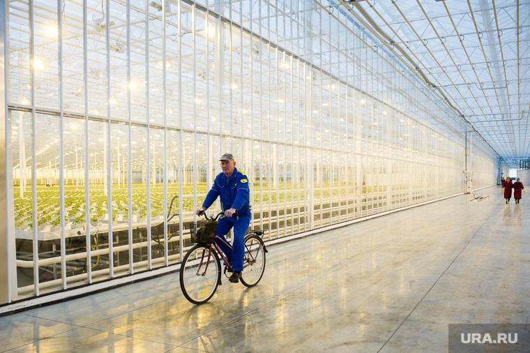 Открытие второй очереди инновационного тепличного комплекса «УГМК-Агро». Свердловская область, поселок Садовый, угмк агро, тепличный комплекс