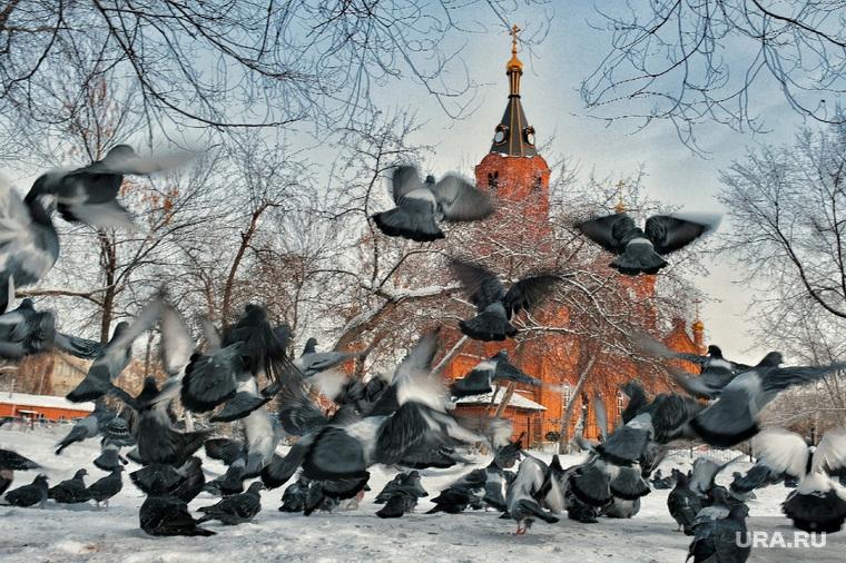 Кормление голубей у Храма Александра Невского. Курган