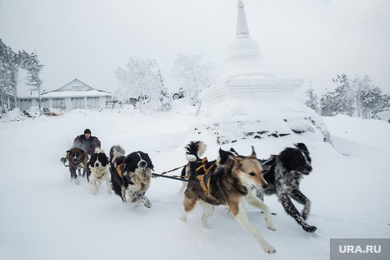 Буддийский монастырь Шедруб Линг. Качканар, собачья упряжка, сергей с собаками