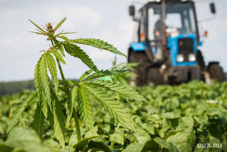 Российские законы конопли семена марихуаны алиэкспресс