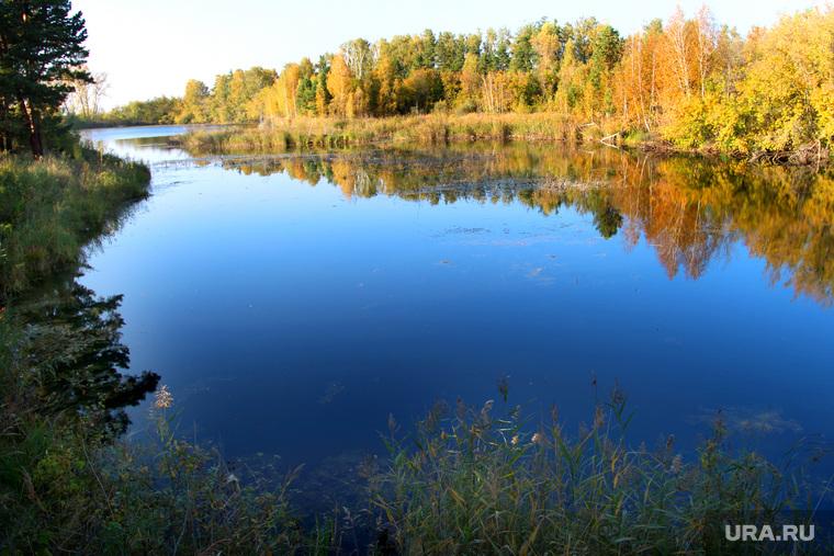 Осенняя природа, разное Курган, река, курганская область, осенний лес