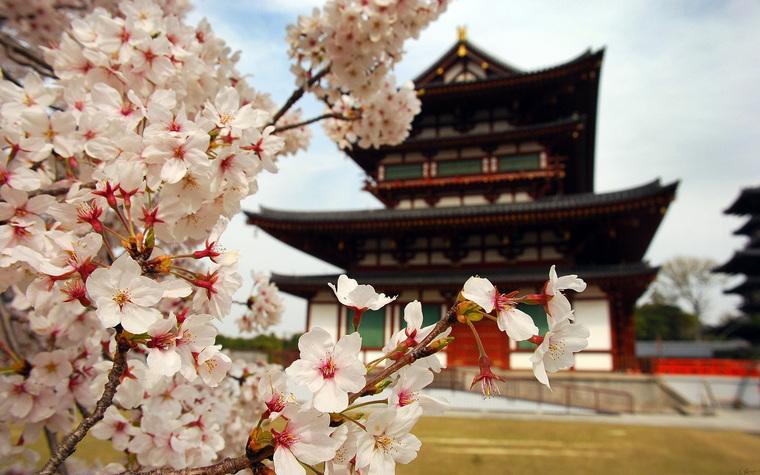 Открытая лицензия от 16.12.10.2016. , япония, сакура, архитектура японии