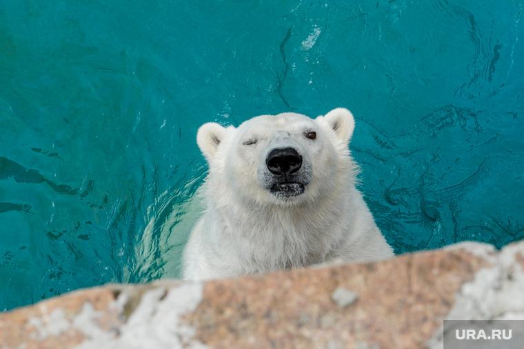 Челябинский зоопарк открыли для посещения. Челябинск