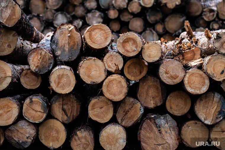 Екатеринбургское лесничество во время подготовки к летнему пожароопасному сезону. Екатеринбург, деревья, лес, древесина, вырубка леса, лесозаготовка, срубленные деревья, вырубка деревьев, обработка древесины