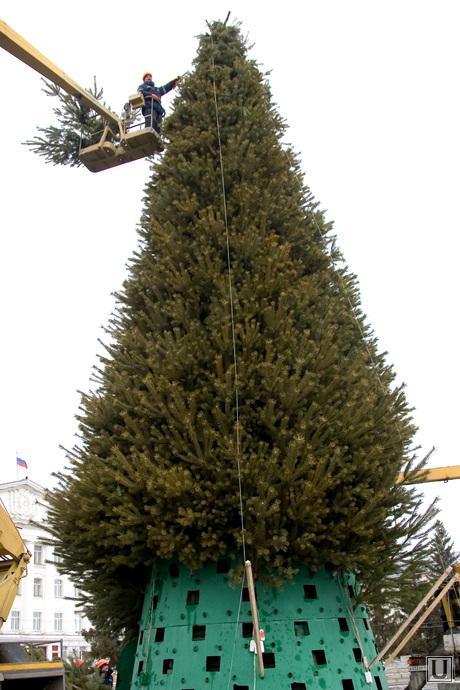 Подготовка к Новому году Курган, установка елки