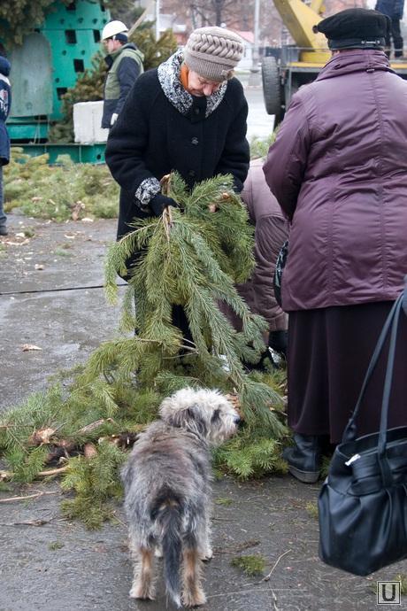 Подготовка к Новому году Курган, установка елки, сосновые ветки