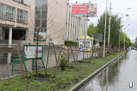 Озеленение города Курган, озеленение города, дубки