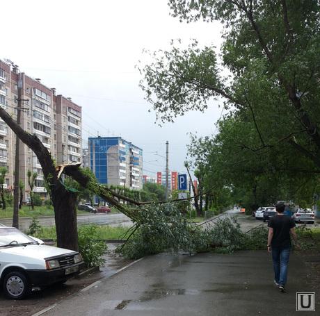 Ураган и ливень в Челябинске, 06.06.2014, ураган, дерево