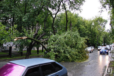 Упавшее дерево на Бажова. Екатеринбург