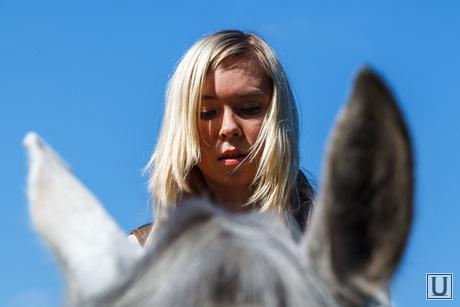 Пресс-конференция, посвященную первому в мире конкурсу красоты среди лошадей. Екатеринбург, лошадь