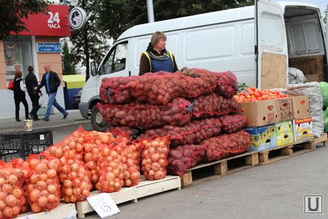 Открытие овощной ярмарки Курган, овощи, продавец, овощная ярмарка