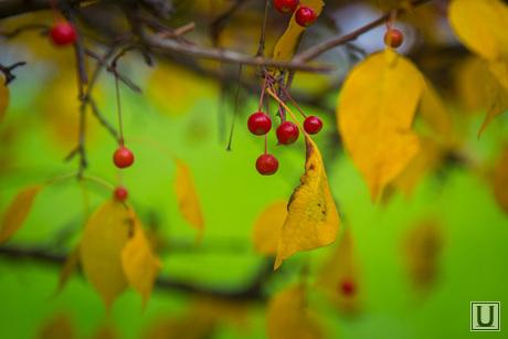 Осень и яблони цветут. Екатеринбург, осень, дичка