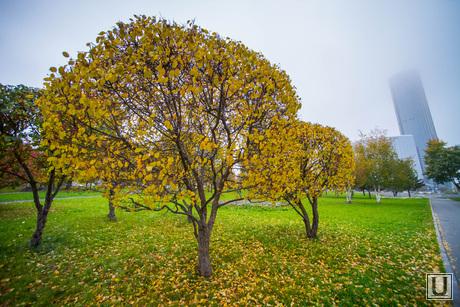 Осень и яблони цветут. Екатеринбург, осень