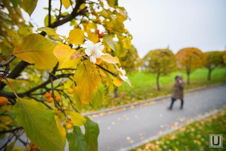 Осень и яблони цветут. Екатеринбург, яблоня цветет, осень