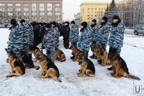Полиция. Челябинск., собака, полиция, кинологи
