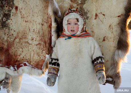 Быт Ямальских оленеводов. , манси, кнмс, ханты, аборигены, шкуры, кочевники, фольклор, народный костюм, дети